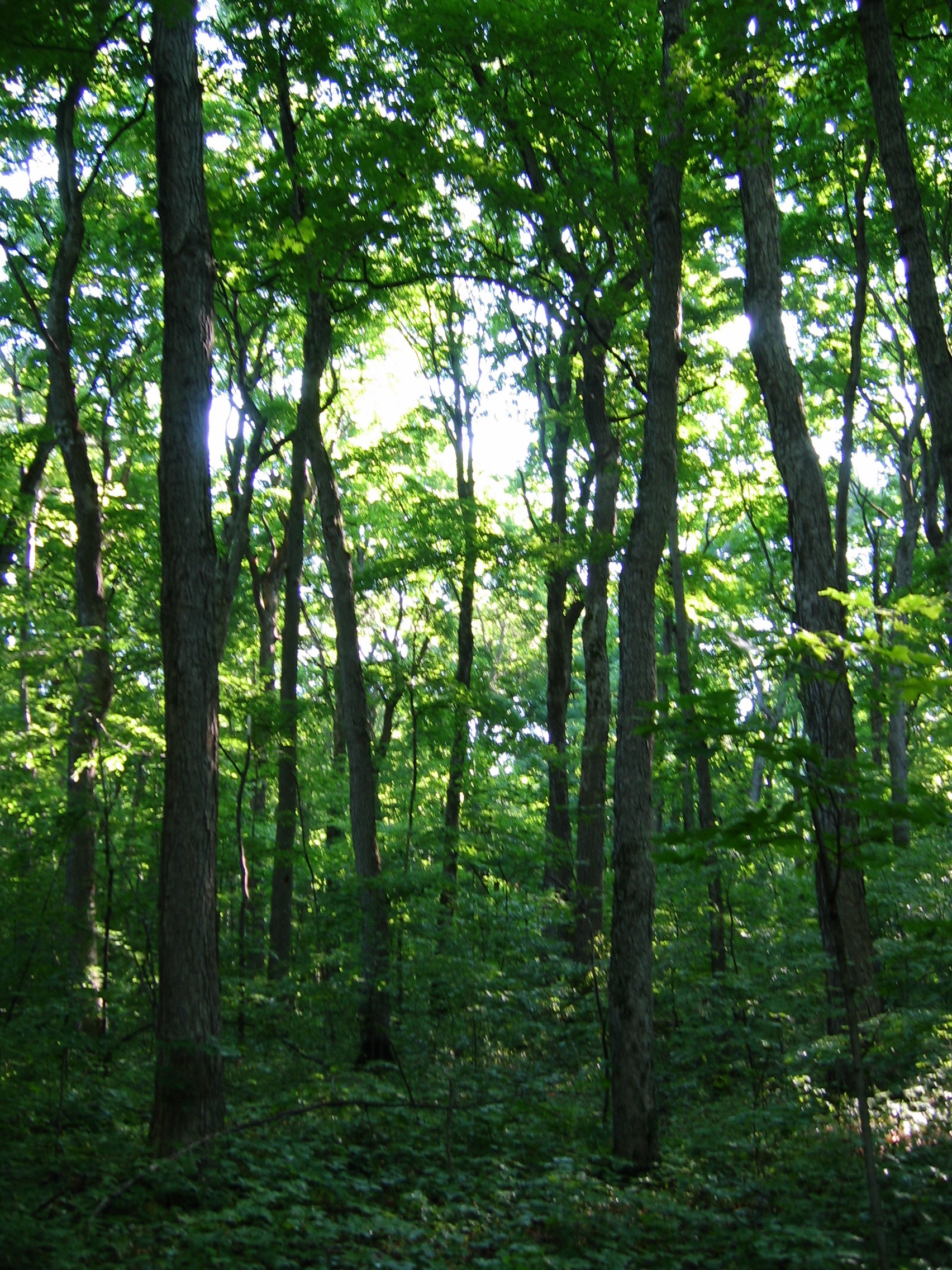 An Area Of Old Growth Forest In Awenda Provincial Park C Copyright 2011 All Rights Reserved